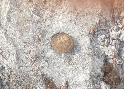 Tynne 5-9.10.2015 Odnaleziona mogiła żołnierzy KOP-21